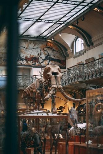 scheletro di mammut, immagine