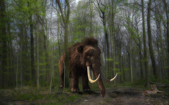 ricostruzione di un mammut in 3D